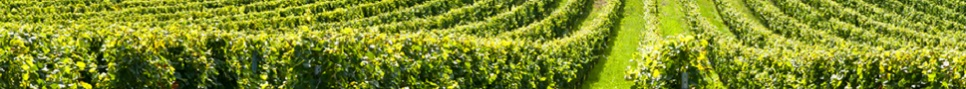 Header_wijn2